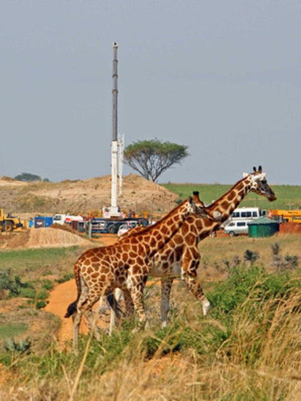 El camino hacia la extinción de muchas especies es 'imparable'