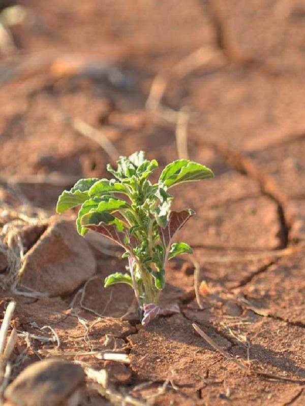 BBVA, una piedra en el camino contra el cambio climático