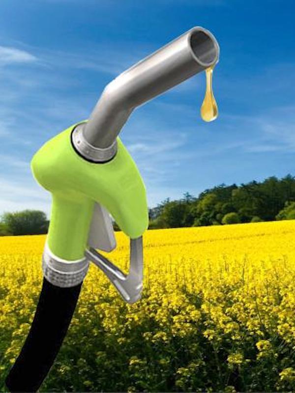 Bruselas fija los criterios para identificar biocombustibles que generan más emisiones de CO2