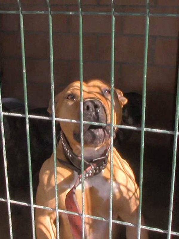 Campaña para intensificar el control de los perros potencialmente peligrosos