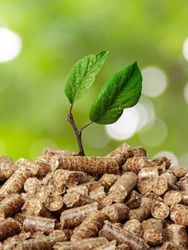 Andalucía líder en biomasa