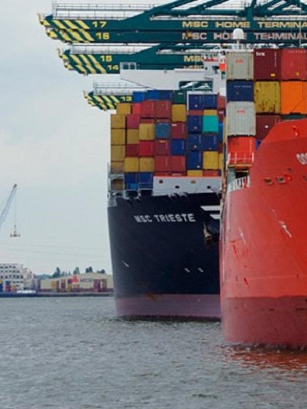 El tráfico marítimo es la pasarela perfecta para las especies invasoras