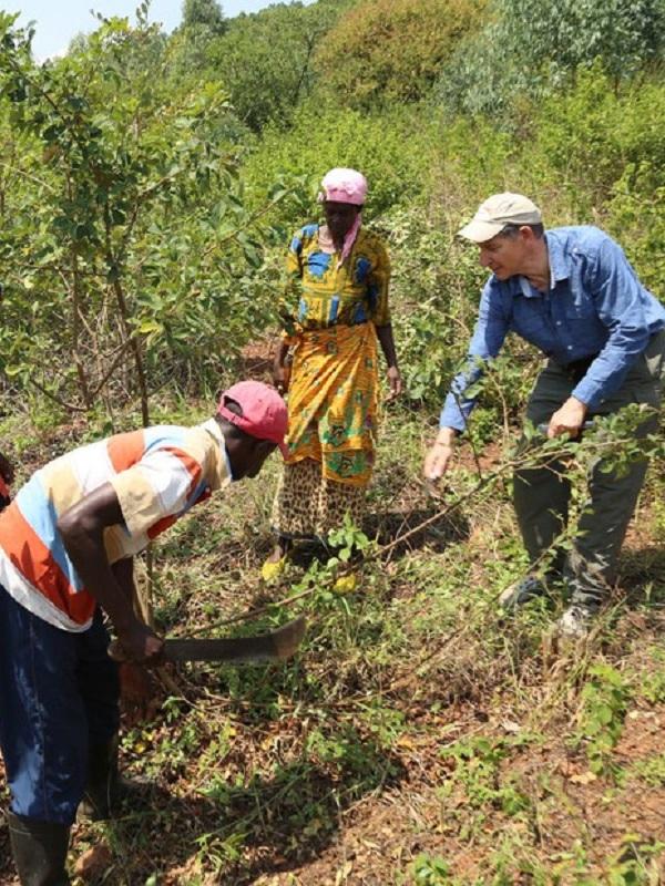Transformar el desierto africano en 200 millones de árboles