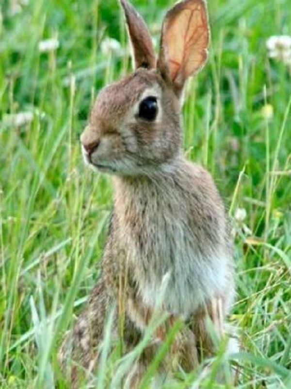 A los conejos les gusta comer plantas con mucho ADN