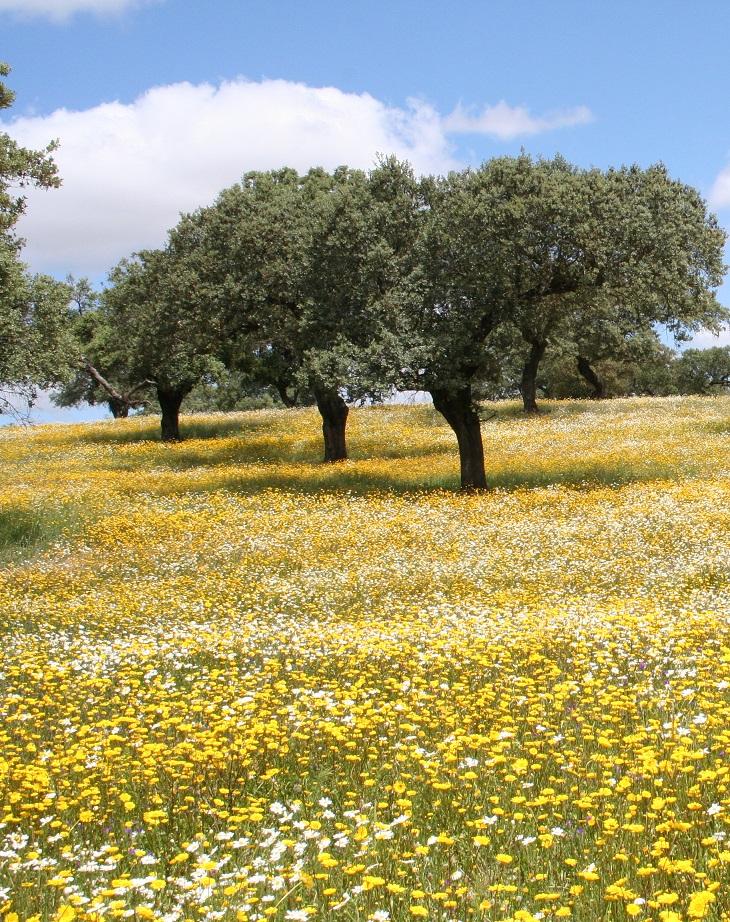 Primavera en la Dehesa