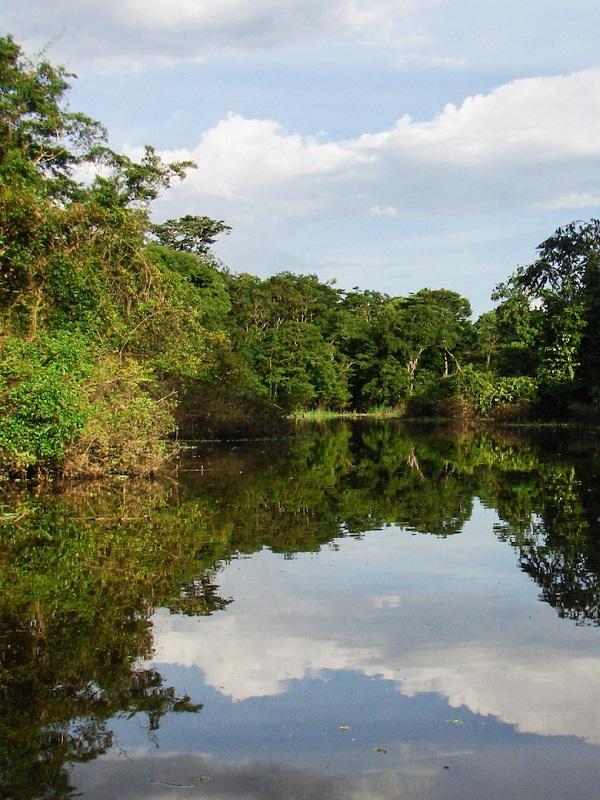 Greenpeace recuerda la urgencia de defender la Amazonía ante las amenazas del Gobierno de Bolsonaro