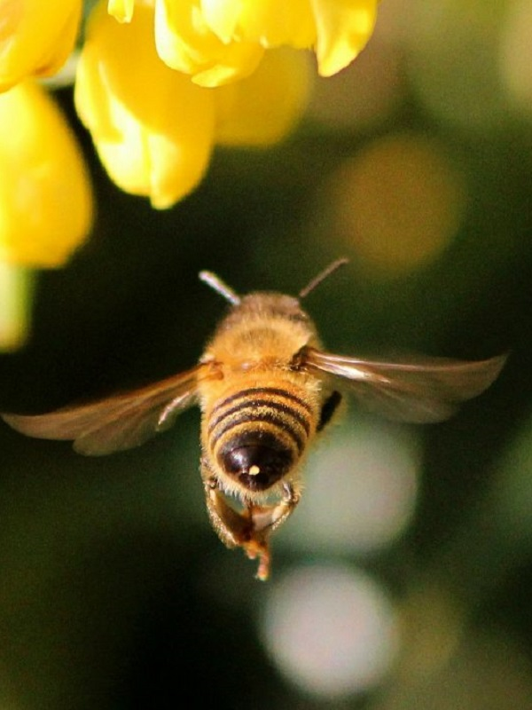 EQUO reprocha al Gobierno su falta de ambición en el plan para garantizar la biodiversidad de los insectos