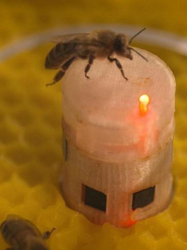 Robots ponen en comunicación a abejas y peces