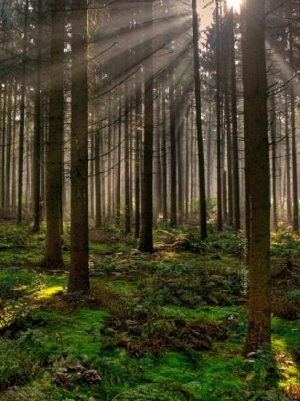 Los bosques tropicales pagarán 'caro' el cambio climático