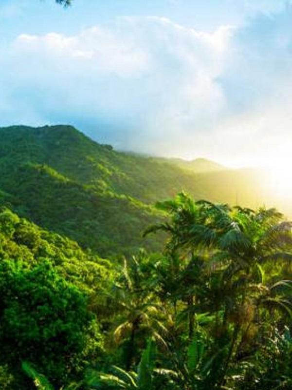 El cambio de vegetación estacional global, a 23.000 millones de píxeles