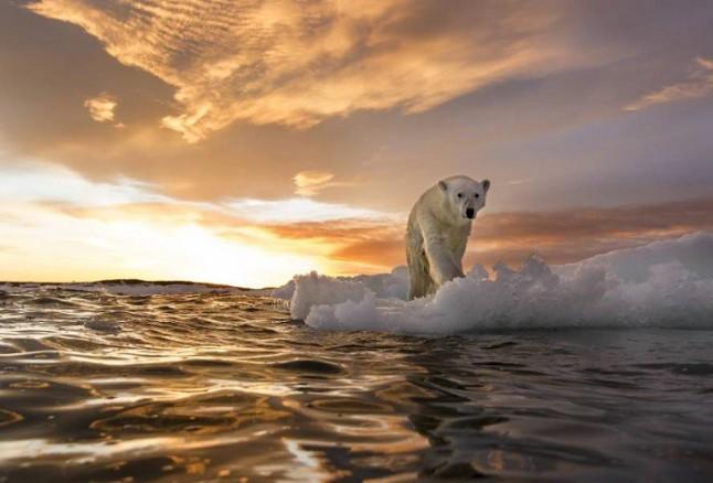 Piel de Atún, el primer movimiento español para liderar la lucha contra el cambio climático