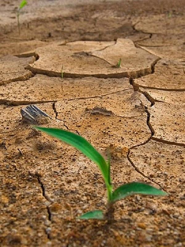 Adelante Sevilla incluye en su programa del 26M la lucha contra el cambio climático para combatirlo