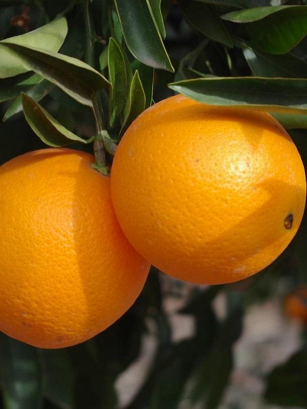 Naranja, mucho más que su zumo