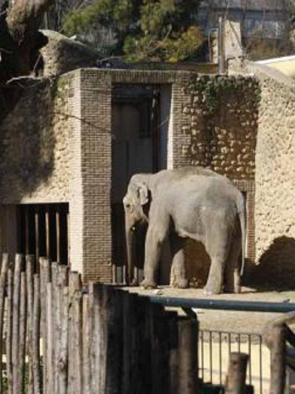 La triste eutanasia de la elefanta 'Flavia', todo lo que no se ha contado
