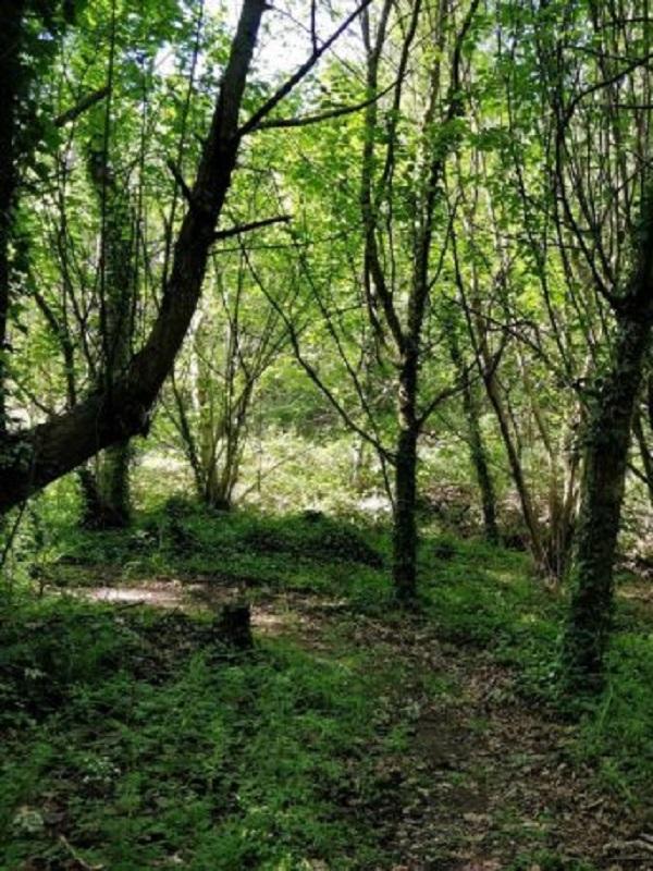 Feliz aniversario del acuerdo de recuperación del bosque atlántico gallego