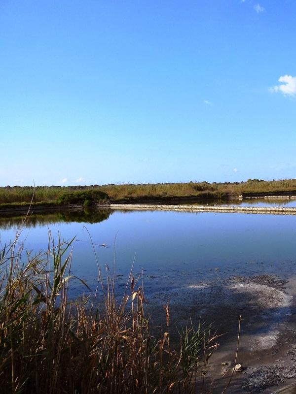 El GOB pide que el nuevo PORN de S'Albufera evite la extracción de sal en Ses Salinetes