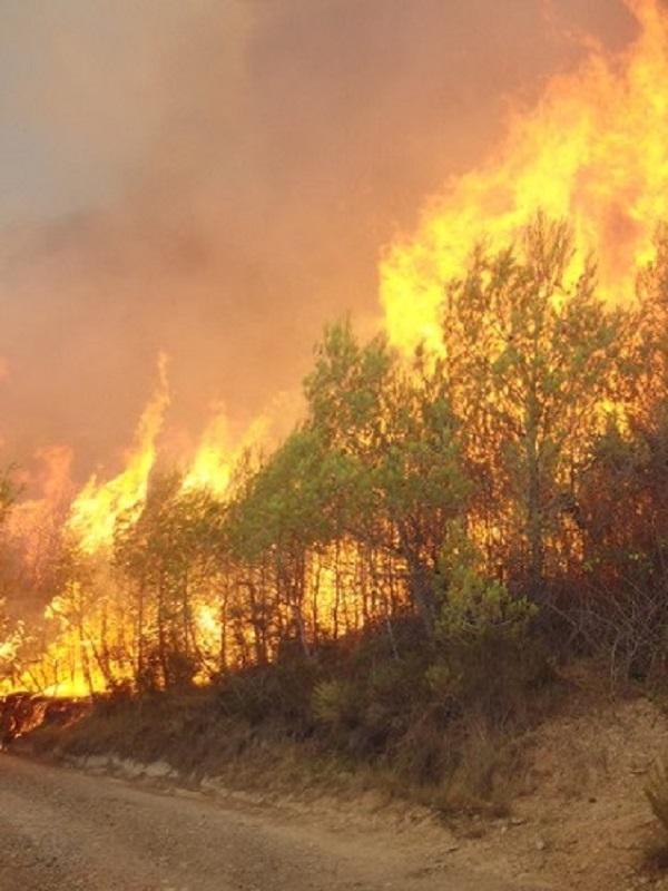 Tecnología verde para identificar los territorios con más riesgo de incendios