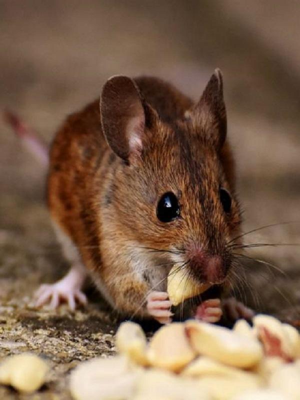 Unos ratones con mucho caràcter