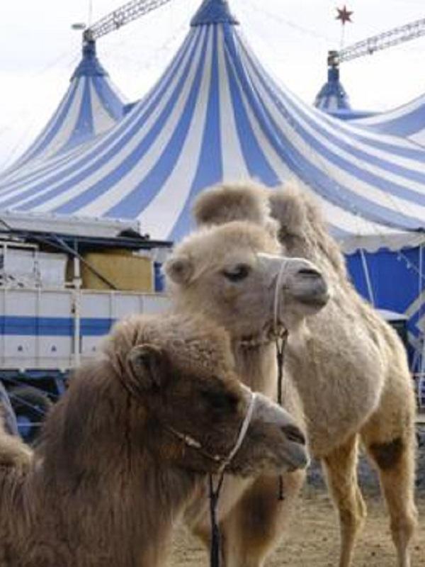 Aún quedan algunos circos con animales salvajes