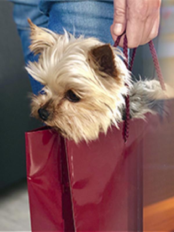 Nace la web 'Tu Perro es Bienvenido', que muestra los comercios de Zaragoza que admiten a estos animales