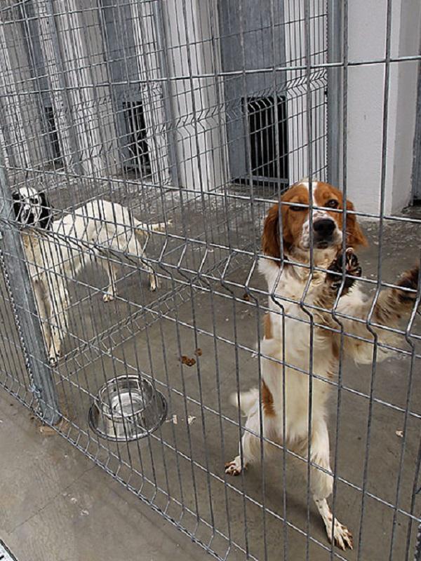 Aprobada una nueva Ordenanza reguladora de la tenencia y protección de animales de compañía de Logroño