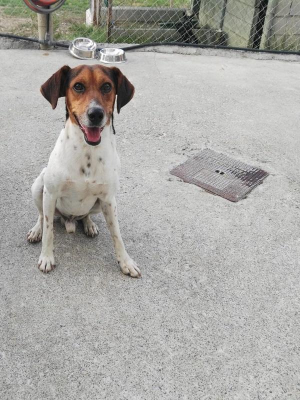 El Centro Municipal de Logroño de Acogida registró el año pasado 319 adopciones y recuperó 842 animales