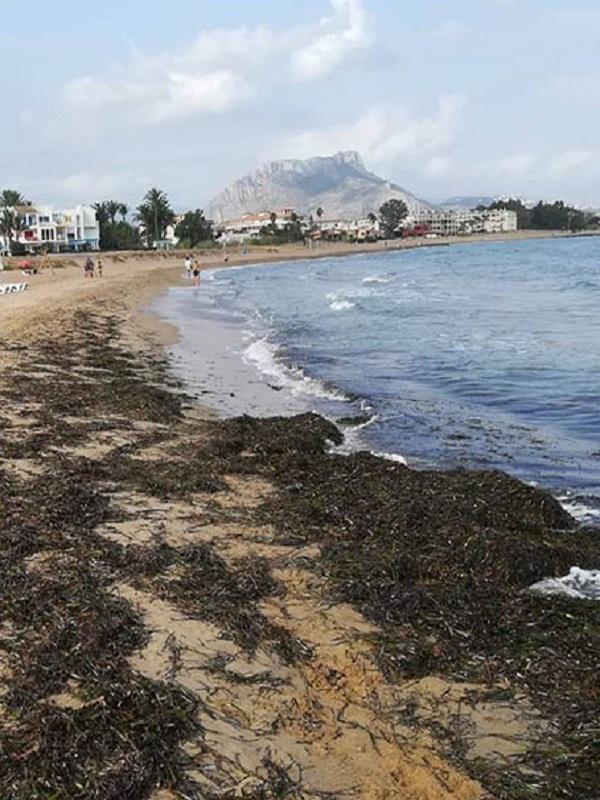 Los arribazones de Posidonia oceanica de las playas no es basura