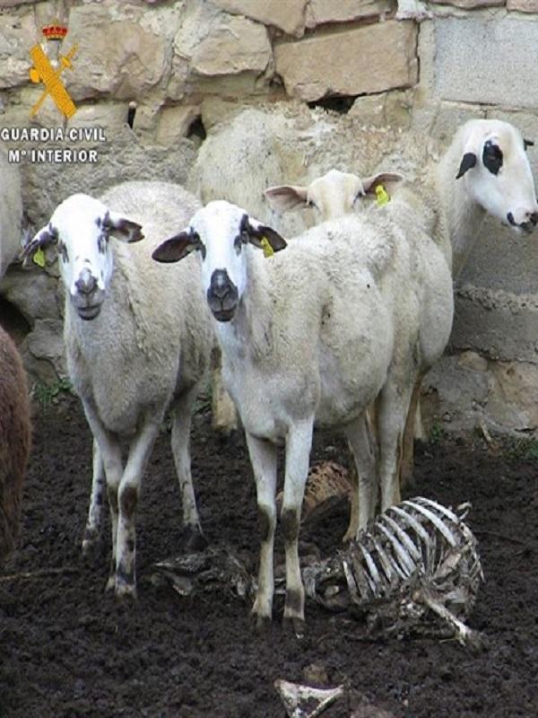 Las condenas por maltrato a animales domésticos se 'disparan'