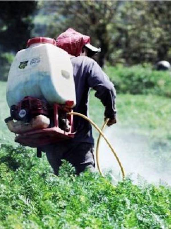 Formaliza México la integración de Grupo Intersecretarial para Regulación sobre Plaguicidas