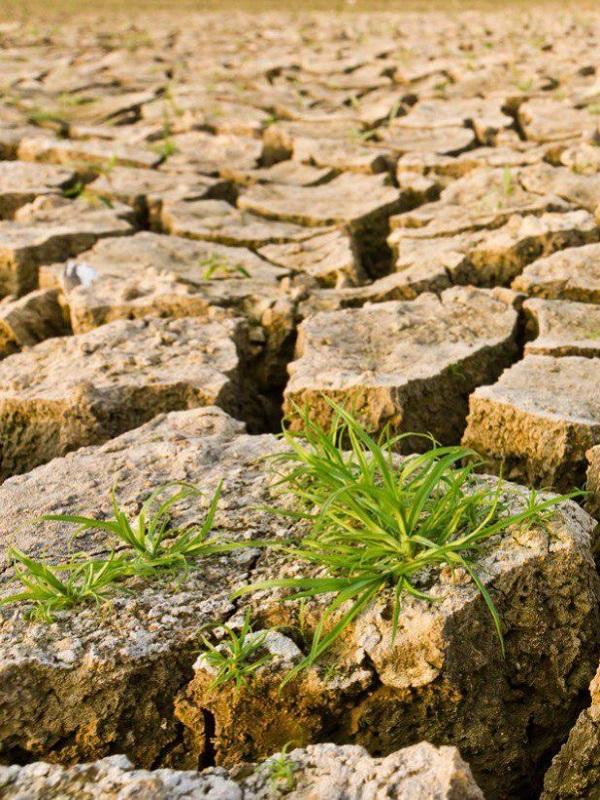 Navarra anima a la participación activa y al compromiso de las mujeres en la lucha contra el cambio climático