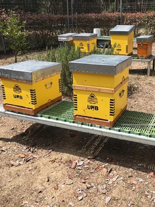 La UAB estrena un colmenar experimental para investigar por qué mueren las abejas