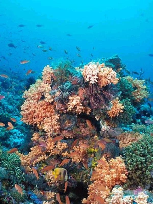 Los microorganismos están respirando arsénico en una gran área del Océano Pacífico