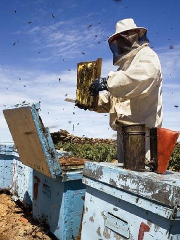 Valentí Serra publica 'El llibre de la mel', un estudio sobre la apicultura en Catalunya