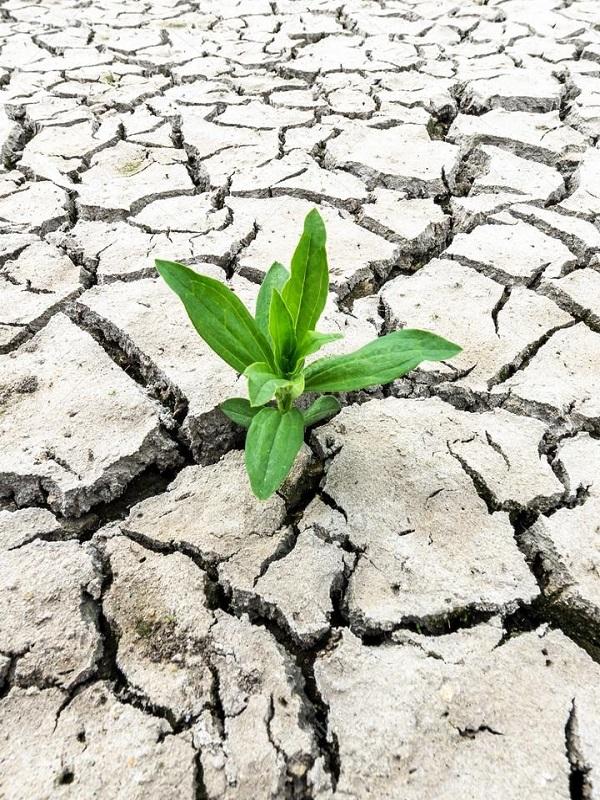 El PP andaluz apuesta por atajar el cambio climático desde los municipios