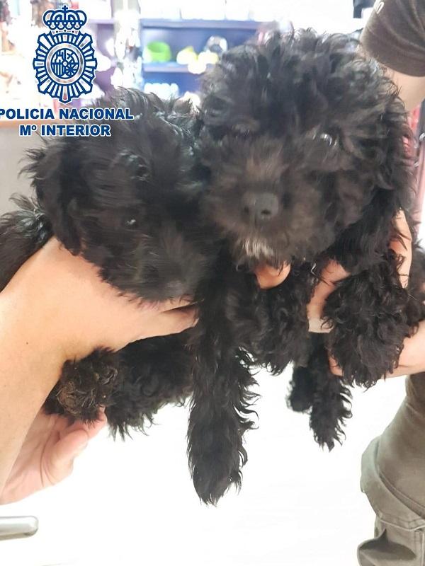 Agentes de la Policía Nacional rescatan a dos cachorros abandonados en un contenedor en Santa Cruz de Tenerife