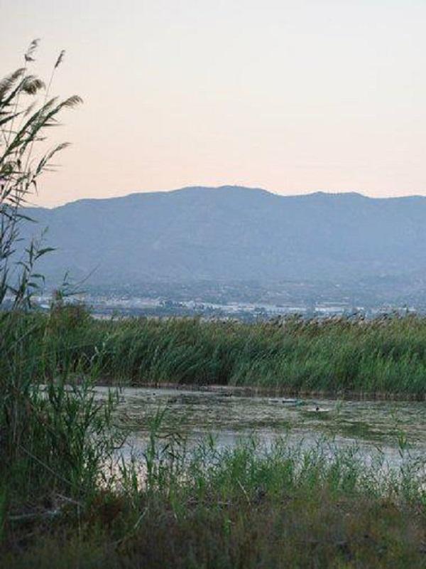 Amigos de los Humedales rechaza la segunda pista del aeropuerto de Alicante-Elche por el