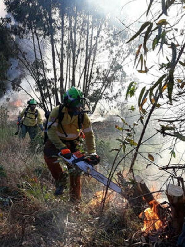 Dos investigados por el incendio en Almonte (Huelva), que arrasó 418 hectáreas
