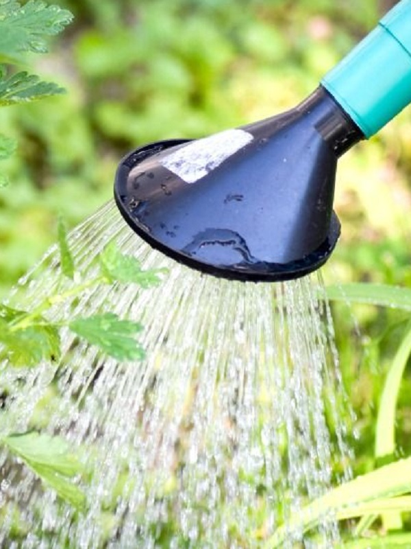Consejos para optimizar el riego de tus plantas