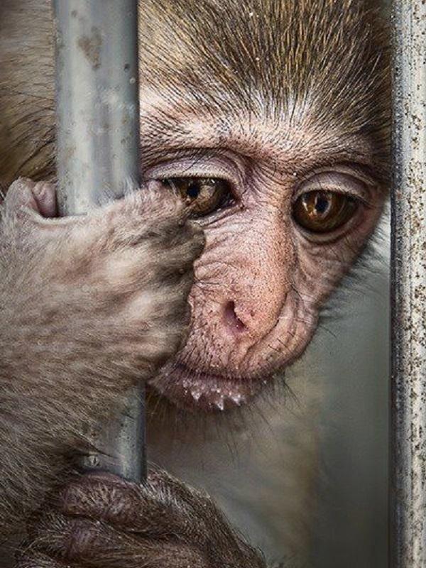 El tráfico de especies es una lacra que pone en entredicho la supervivencia de animales y plantas