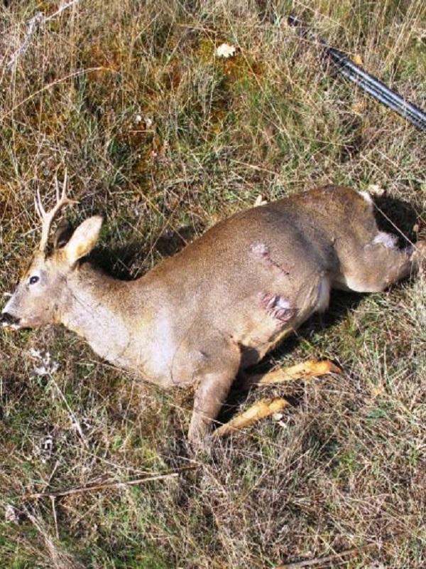 Un cazador furtivo condenado por abatir un corzo en Palencia