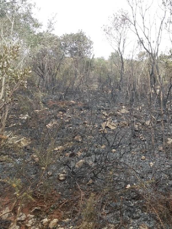 Los efectos de los incendios, en el Fluviarium de Liérganes