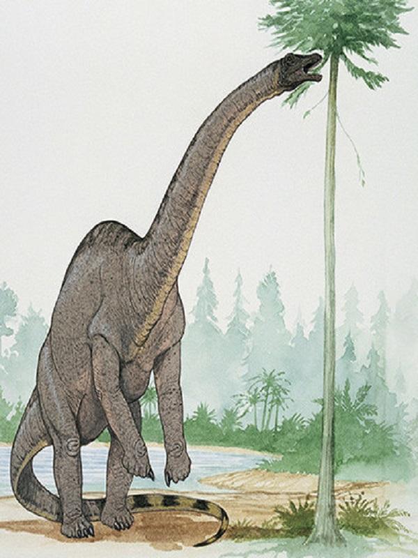 Un dinosaurio de 24 toneladas andaba como si llevara tacones