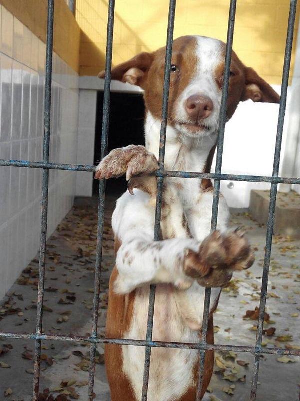 Pacma denuncia que el 90% de los municipios de Valencia abandonan a los animales en perreras