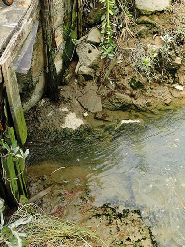Impacto de estrógenos en el medio ambiente