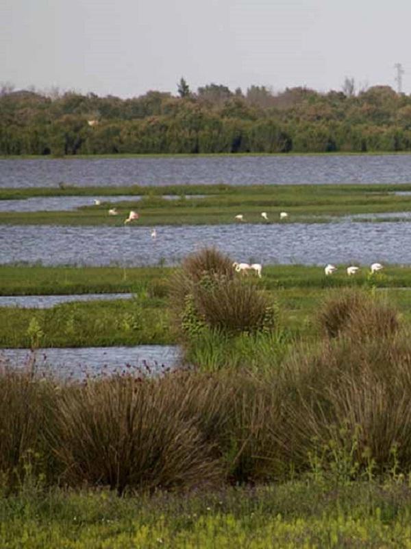 WWF pide medidas urgentes para conservar Doñana, Hoces del Río Riaza y Chinijo