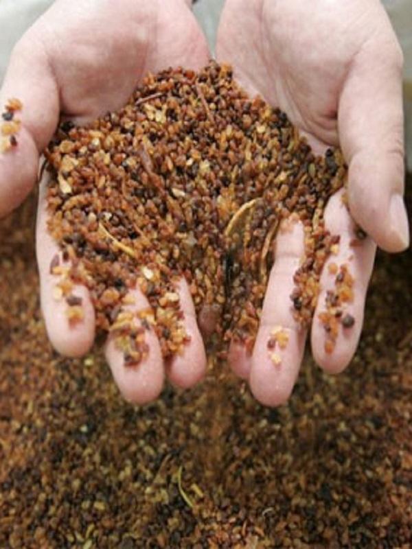 Primeras pruebas de transformación de restos vegetales en pienso para ganado