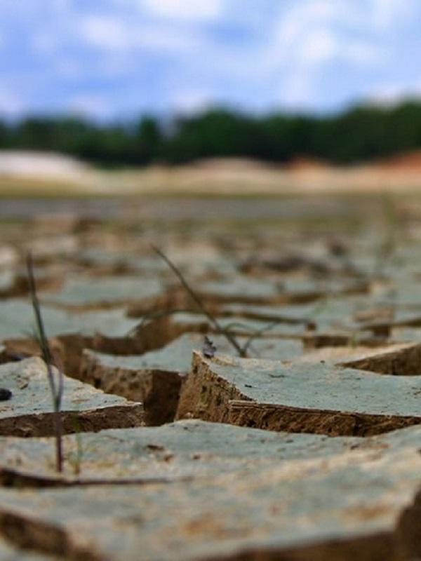 El planeta se enfrenta al colapso ecológico