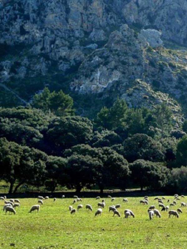 Reduce tu consumo de carne y elige una ganadería ecológica