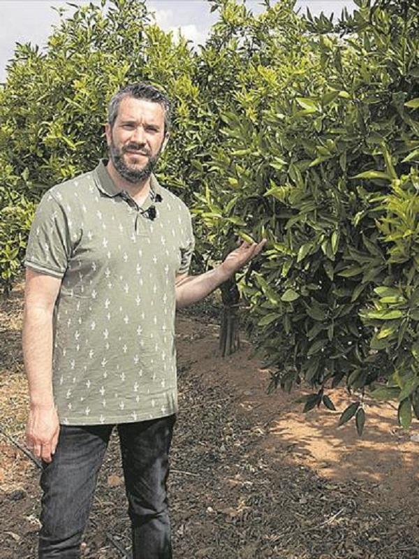 El cambio climático pone en peligro la viabilidad comercial de los cítricos, la viña y el olivo