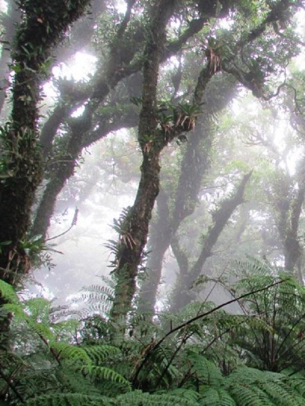 México. Las Áreas Naturales Protegidas La Frailescana y Bahía de Loreto ya cuentan con su Programa de Manejo
